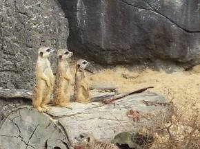 A2 Biology Trip Gallery: Photos from theZoo